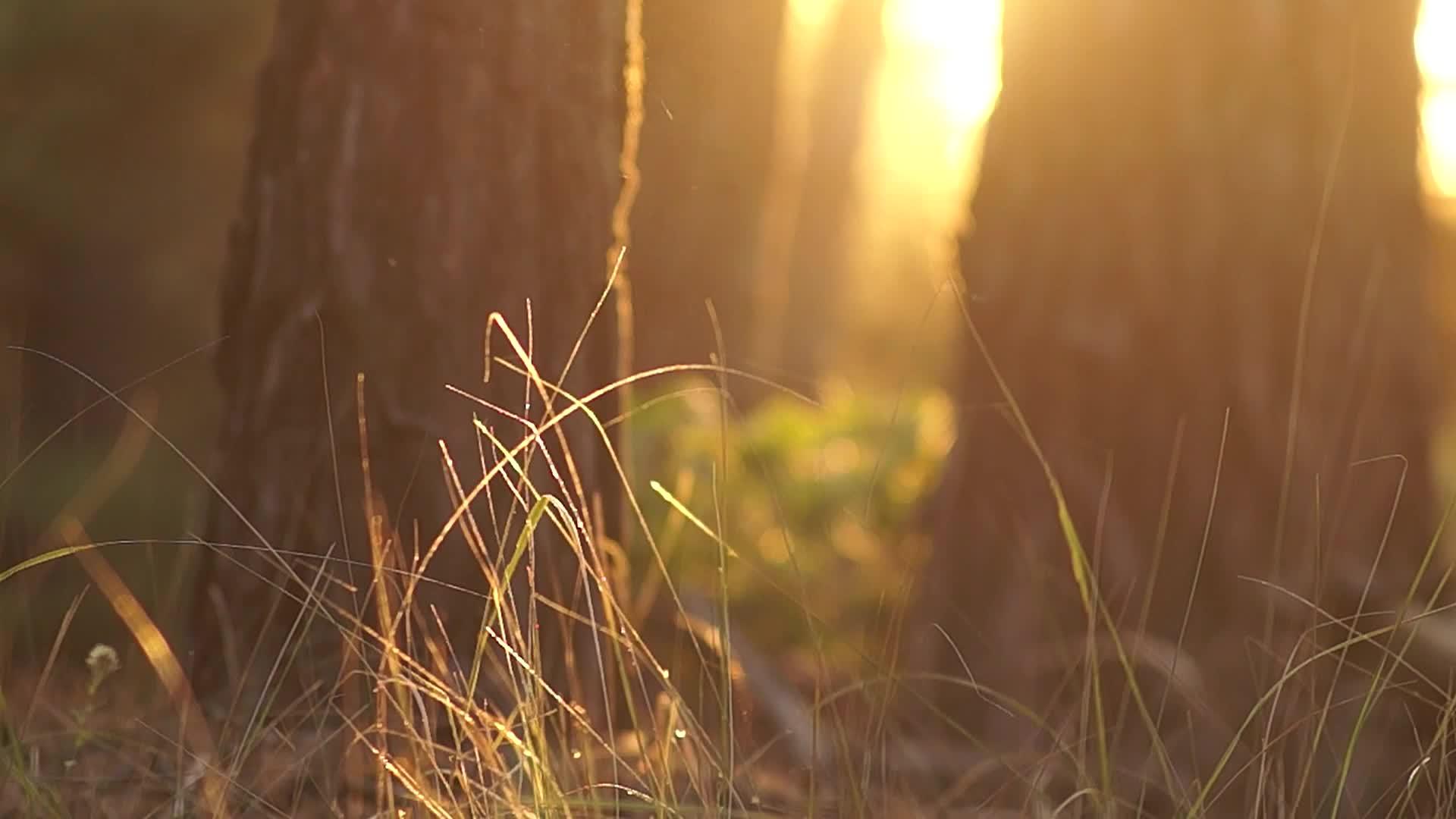 唯美浪漫暖阳大树美景视频素材
