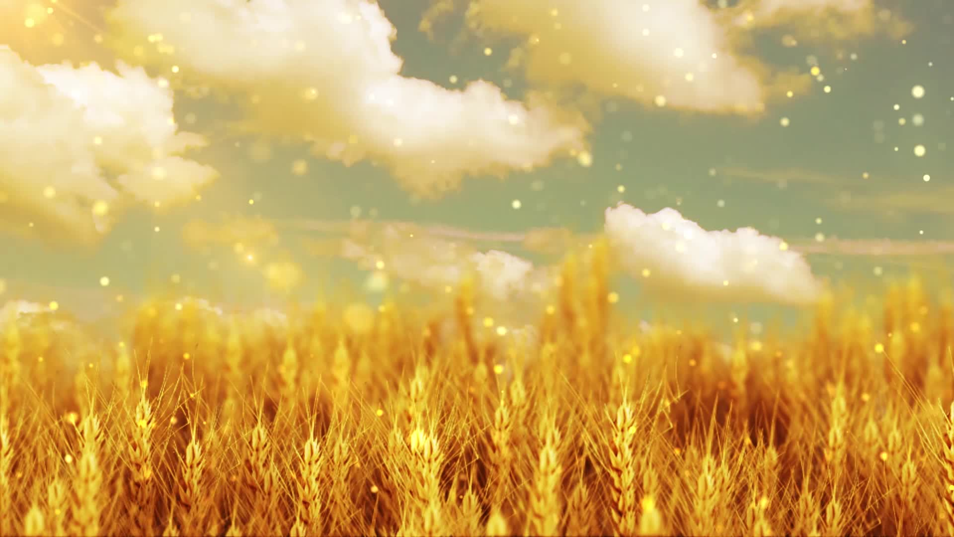 叶一茜风吹麦浪led视频背景素材