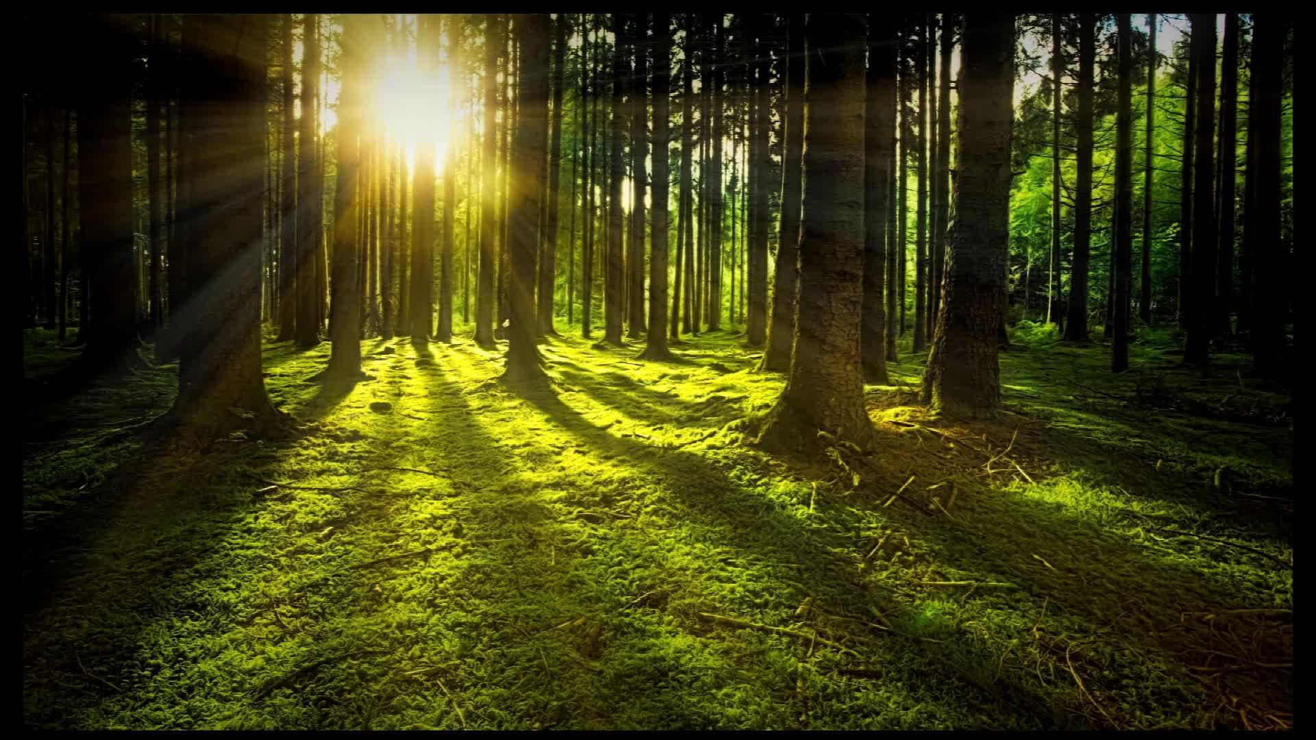 实拍唯美日光下树林视频素材